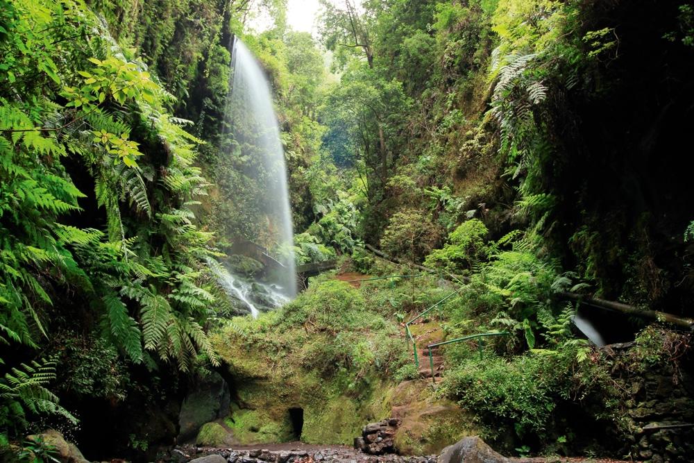 jungle cascade d'eau