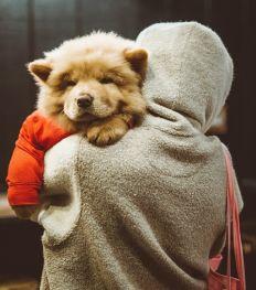 Mopets : le réseau social des amoureux des animaux