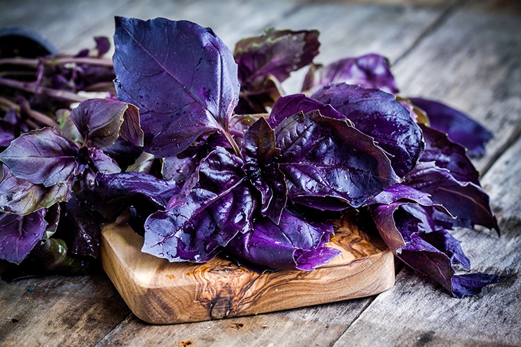 Quelques feuilles de basilic violet l'un des ingrédients du cocktail à la vodka.