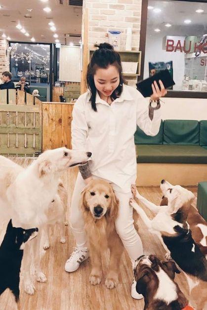 Les dog cafés sont des cafés où les clients peuvent câliner les chiens