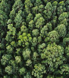 Ces femmes indigènes se battent pour sauver l'Amazonie