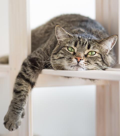 IKEA lance une playlist pour relaxer votre chien ou chat en votre absence