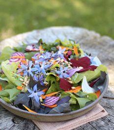 La salade du jardin de Marie Brisart