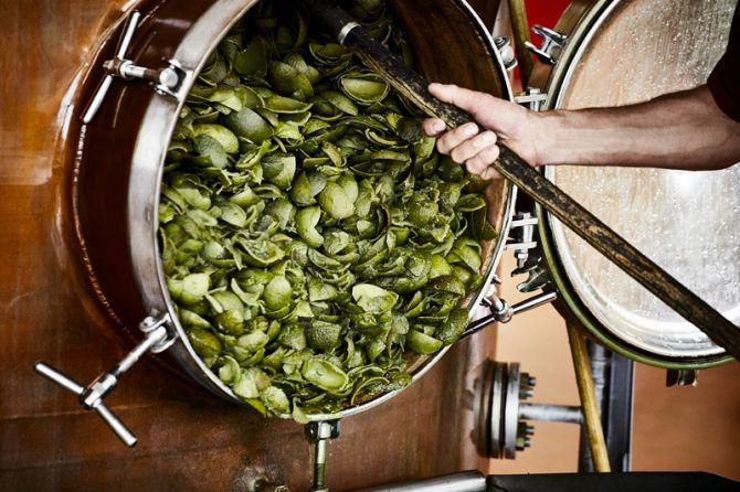 Distillation de la bigarade pour le Grand Marnier