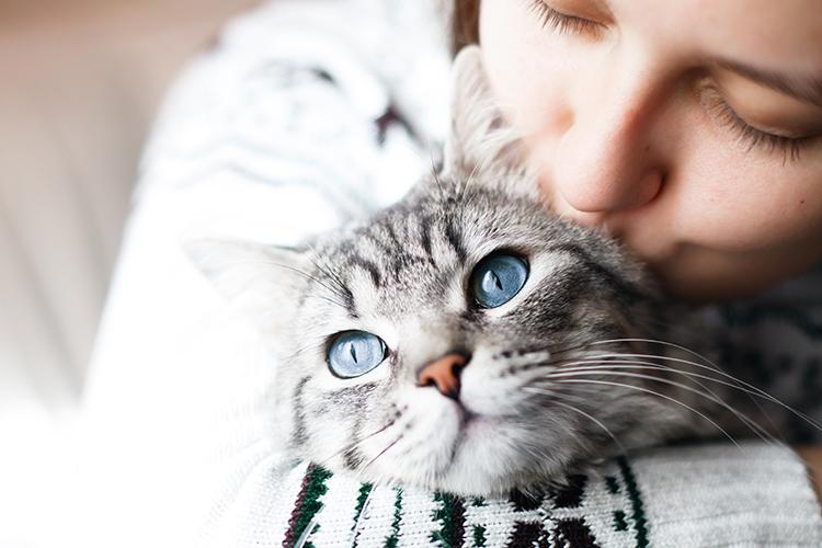 Lush s'associe à CatRescue pour venir en aide aux chats dans le besoin - 1