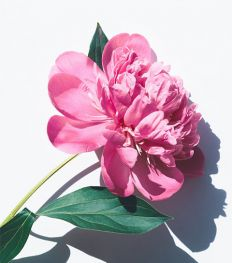 Slow Flower : une manière plus verte d'offrir des fleurs
