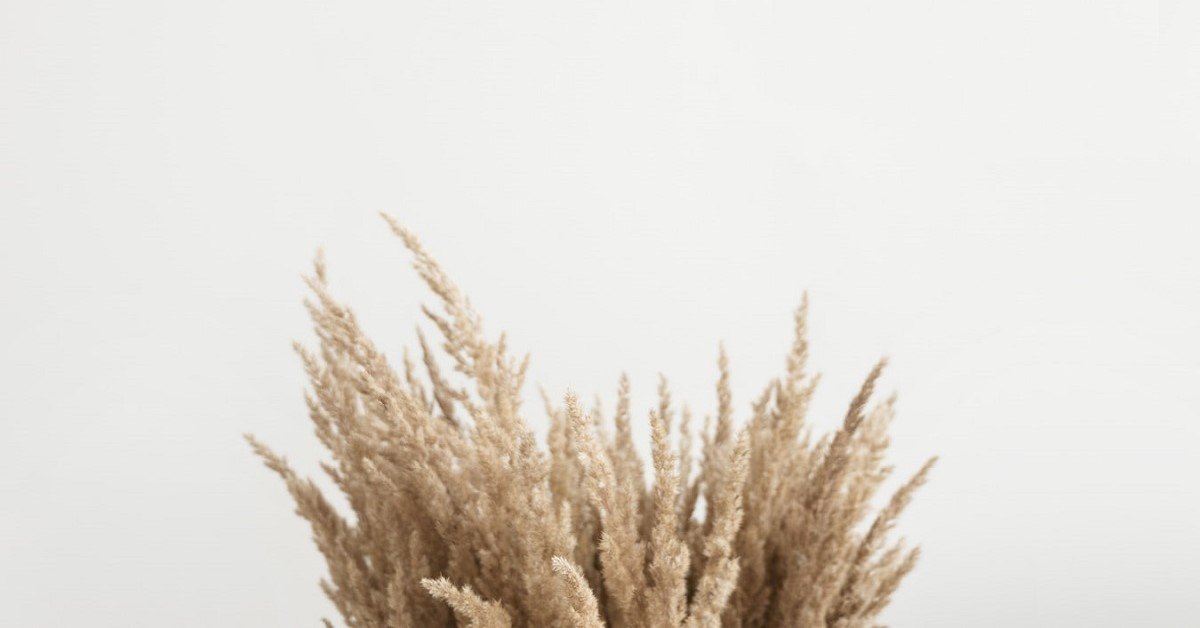 Pampa s/éch/ées Pampas Grande Artificielle 20 pi/èces Fleur sechees Naturelles Decoration Petite Herbe de la Pampa pour Maison Salon int/érieure d/écoration de Mariage ext/érieur Herbe de la Pampa Marron