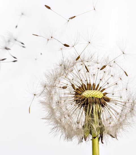 Comment limiter les allergies au pollen ?
