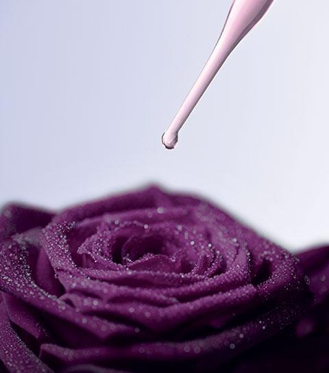Quels sont les bienfaits de la Rose Noire pour la peau ?