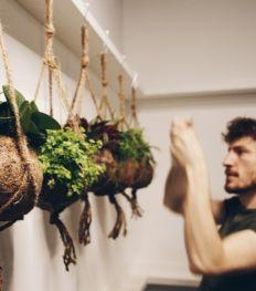JungleLab : le concept-store qui garde nos plantes en bonne santé