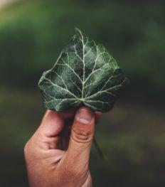 Tapio : une plateforme pour compenser son empreinte carbone en un seul clic