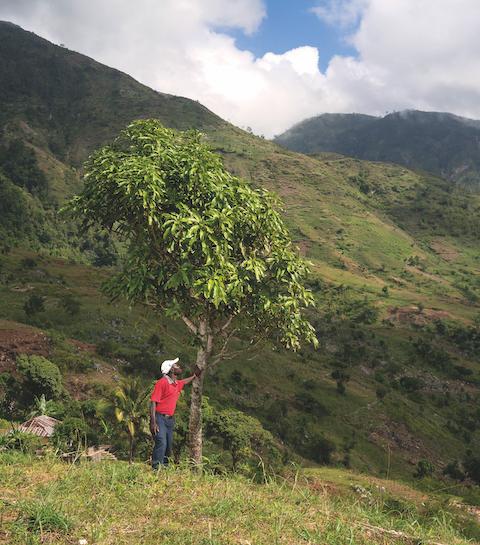 Treedom : la plateforme qui vous aide à planter des arbres de chez vous