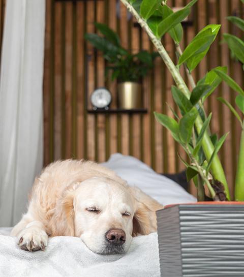 10 plantes non-toxiques pour les animaux de compagnie