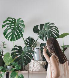 Top 13 des comptes Instagram pour les mordus de plantes
