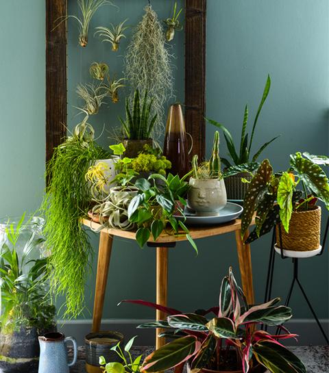 5 plantes d'intérieur qui ont la cote en 2021