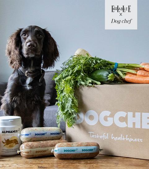 Concours : remportez deux semaines de petits plats sains pour votre chien