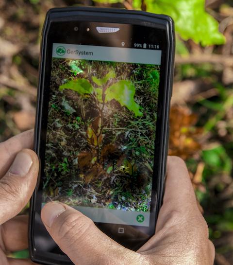 Treedom plante des arbres au Guatemala pour soutenir les femmes