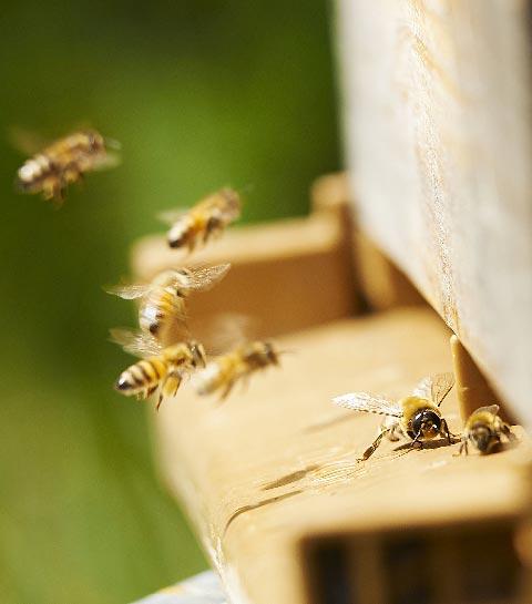 potager abeilles