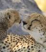 Botswana : 5 raisons de s'y évader en 2021