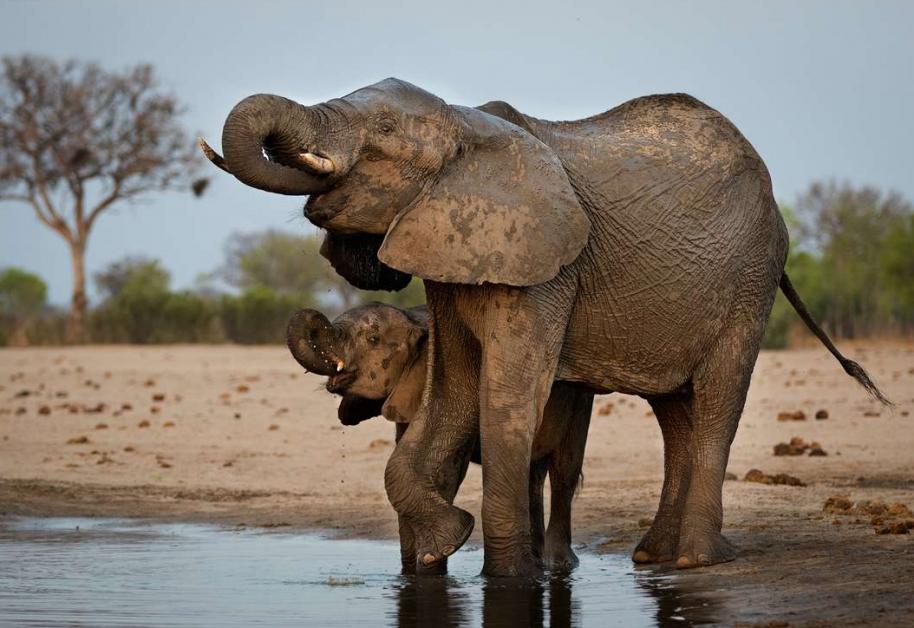 Botswana : 5 raisons de s'y évader en 2021 - 3