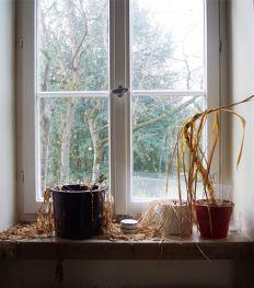 Comment arrêter de tuer vos plantes d'intérieur ?