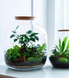 L'activité à tester cet été : le Workshop terrarium à l'hôtel Indigo