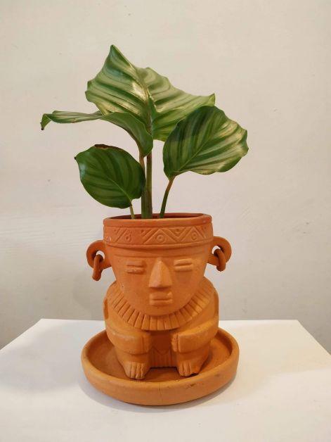 Agave pot de plantes
