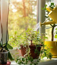 Plantes vertes à domicile : les bienfaits insoupçonnés