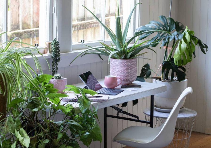 Plantes vertes à domicile