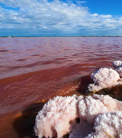 Fleur de sel : à la découverte d'un trésor camarguais