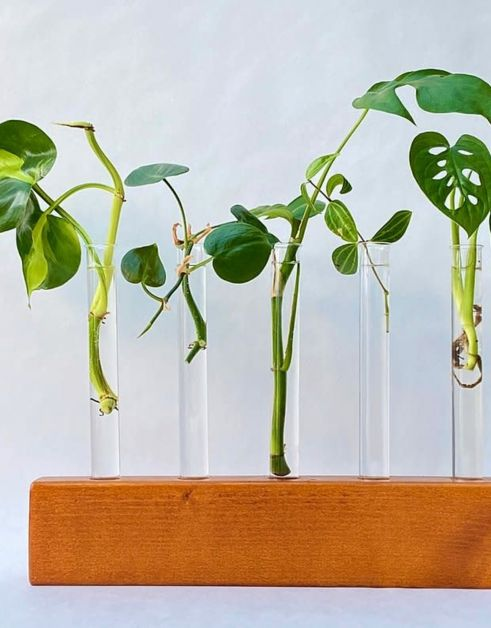 Gruun cutting station plantes