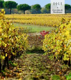 Roadtrip Bordeaux: ontdek de Entre-Deux-Mers wijnstreek