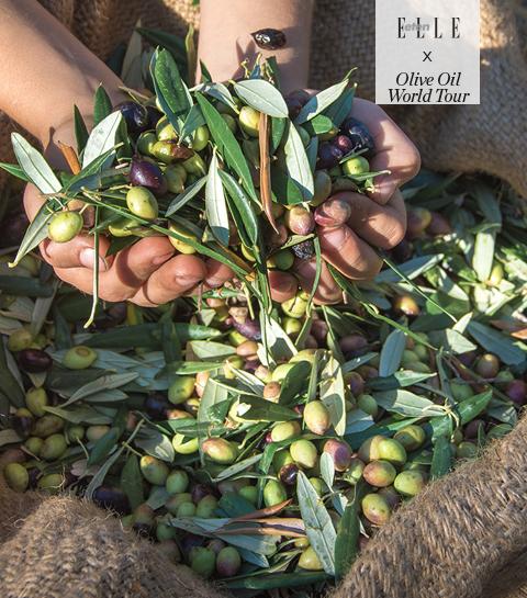 Koken met olijfolie. Recept: Kerstkoekjes