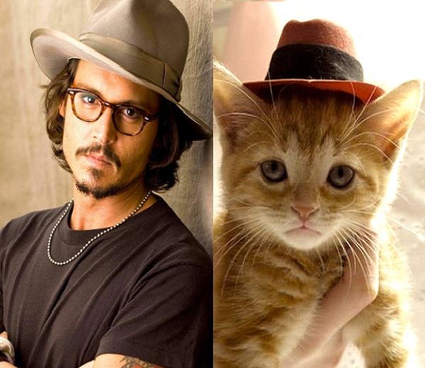 Des hommes et des chatons: Hete binken en katachtige look-a-likes op één website