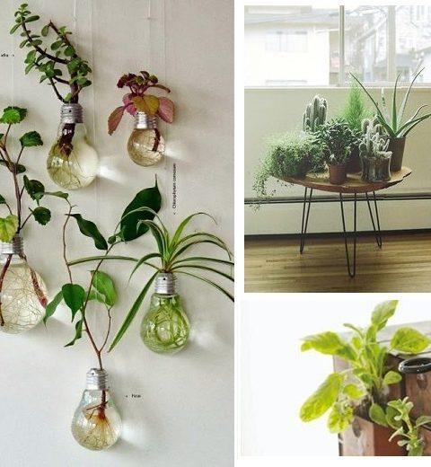 Binnenkijken. Indoor plantentuin