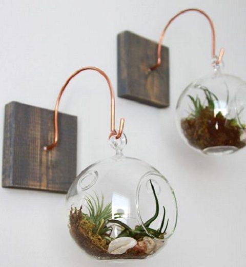 Trend. Exotische tillandsia planten