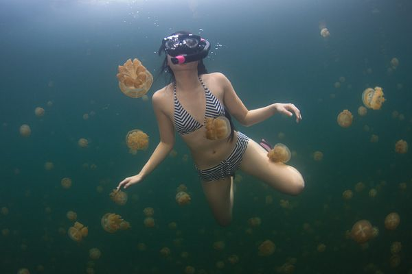 1-jellyfish-lake-palau