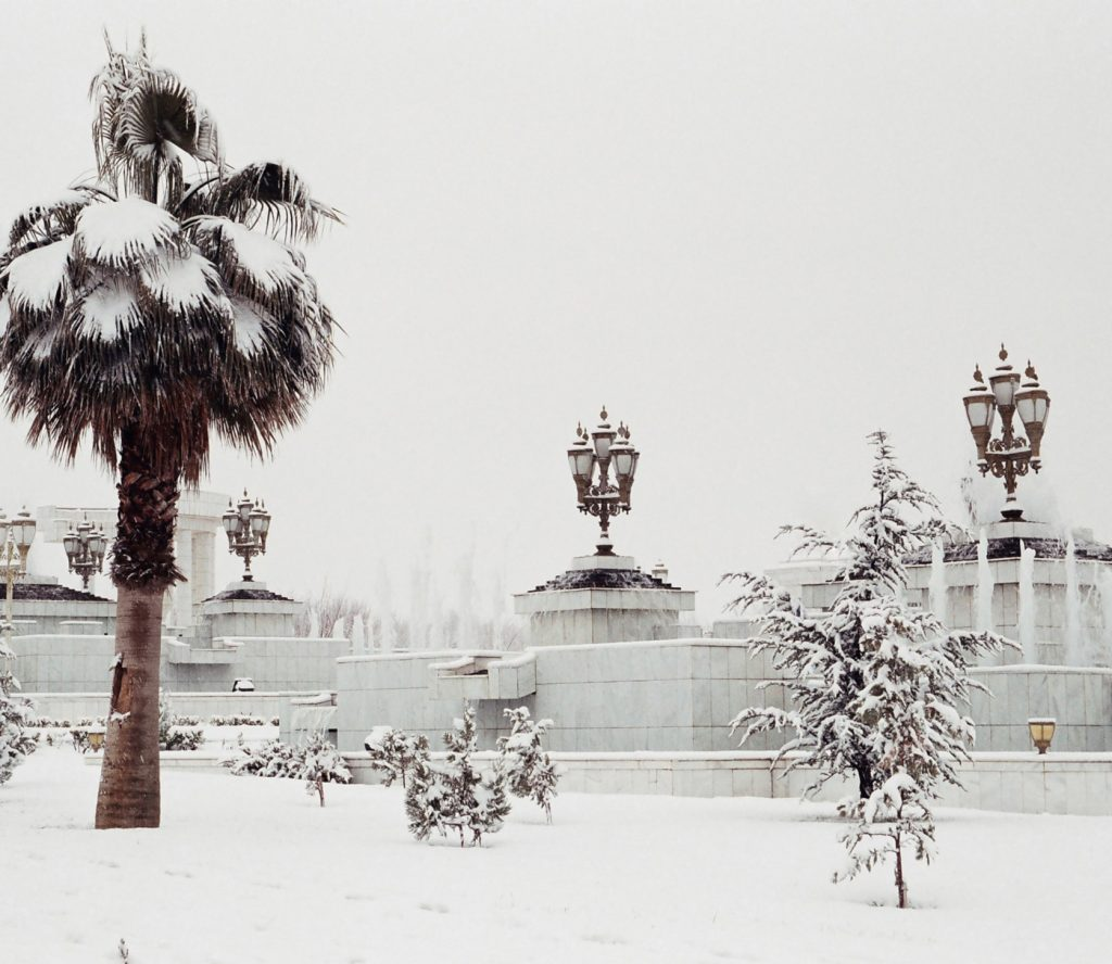 Palmtree under the snow
