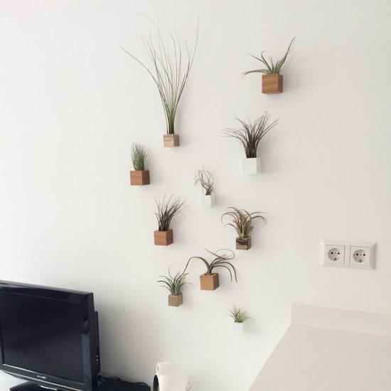 Deco shopping groen - Deco muurdecoratie ...