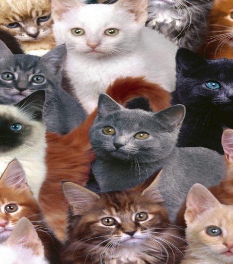 9 apps voor kattenmensen