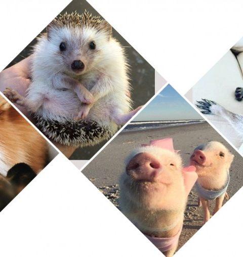 Dit zijn de 10 schattigste dieren op Instagram