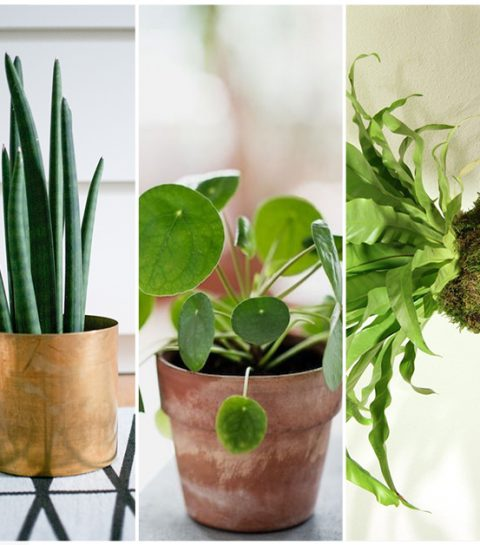 Shopping: de 5 it-planten van dit moment
