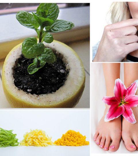 10 verrassende dingen die je kan doen met fruitschillen