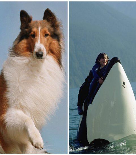 Hoe zou het nog zijn met deze bekende filmdieren?