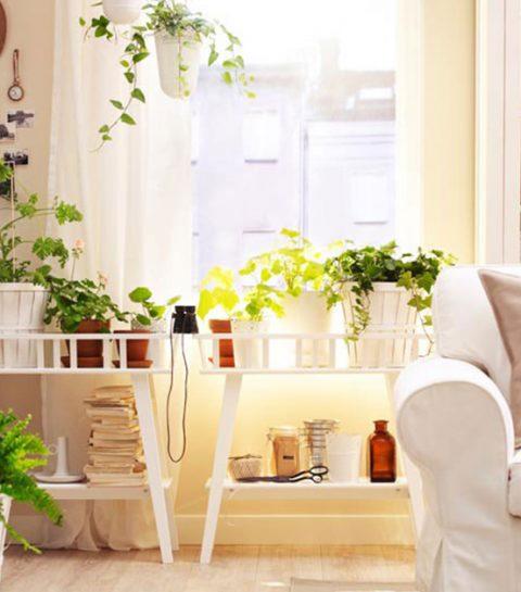 Daarom moet je dringend planten in huis halen