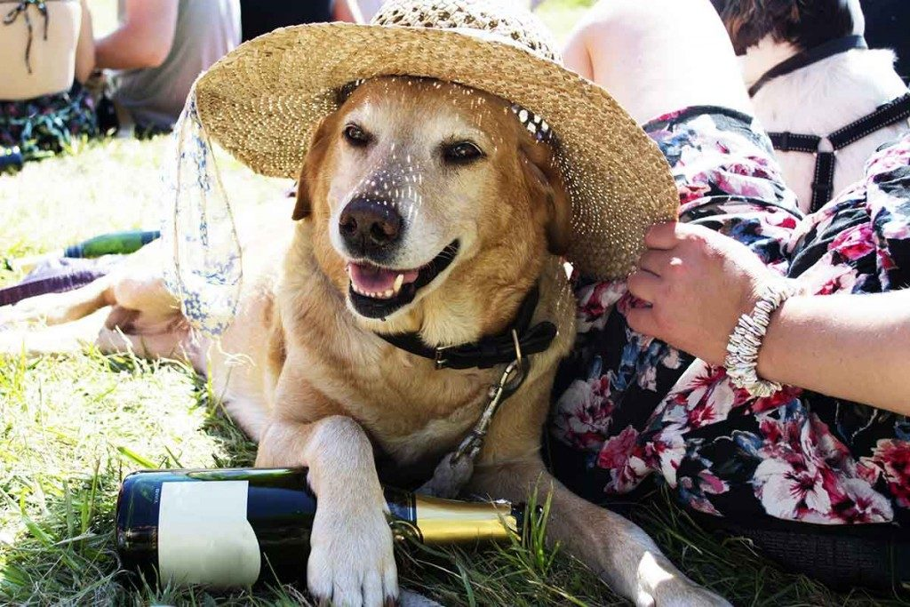 golden-retriever-festival-1024x683