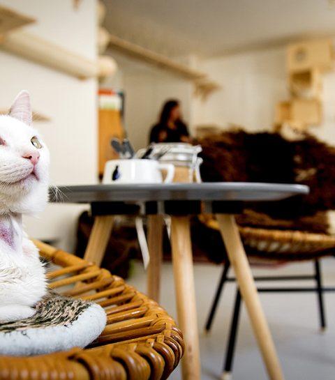 Waar vind je kattencafés in België?