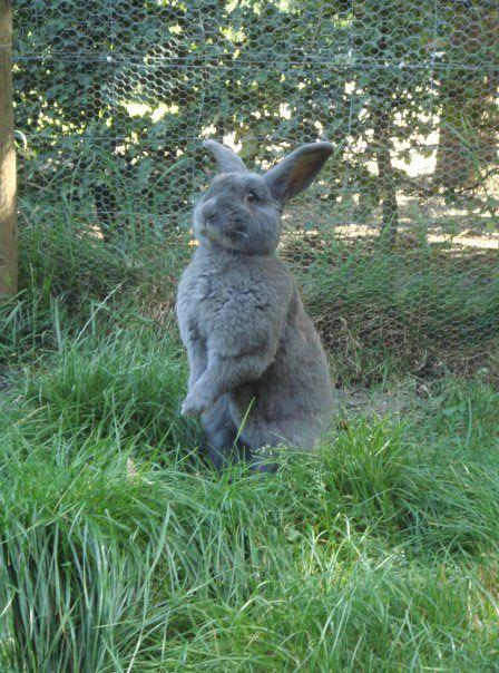 Belgische dierenrassen dieren van eigen bodem 3