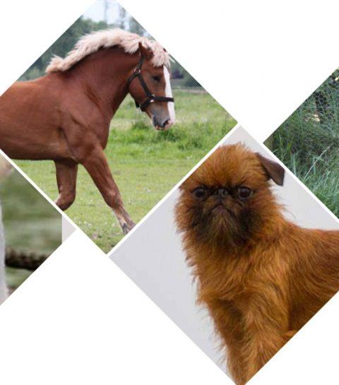 Dit is Belgisch: de 10 coolste dieren van eigen bodem