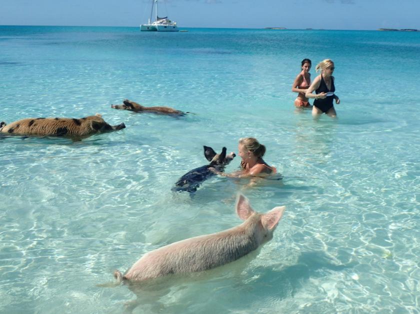 zwemmen met varkens 2